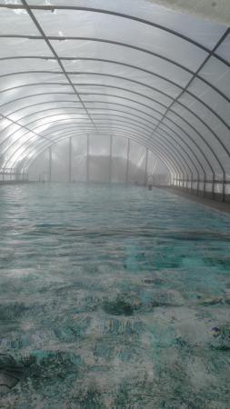 Lost Trail Hot Springs Resort: Pool