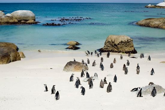 Kleinbaai, South Africa: Boulders Beach