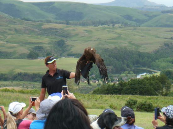 uKhahlamba-Drakensberg Park, Zuid-Afrika: True passion for the Raptors