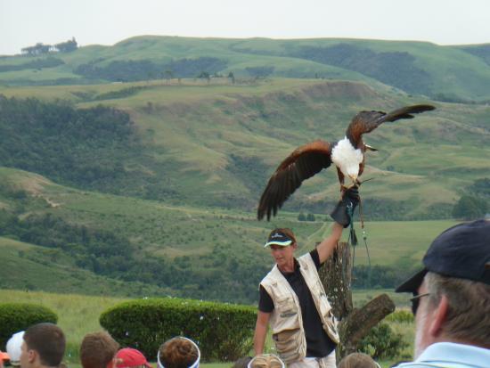 uKhahlamba-Drakensberg Park, Zuid-Afrika: Fish Eagle