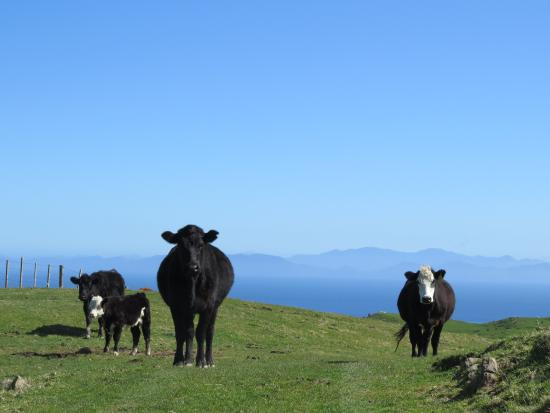 Tussock Ridge Farm Tours