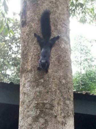 Sukau, Malezya: Kinabatangan Jungle Camp