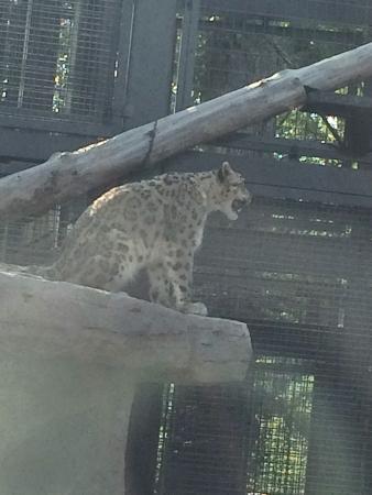 photo1.jpg - Picture of Maruyama Zoo, Sapporo - TripAdvisor