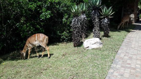 Shamwari Game Reserve Lodges: Near the restaurant