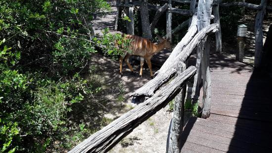 Shamwari Game Reserve Lodges: Near our tent