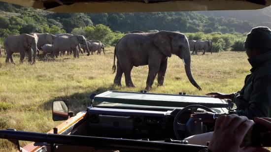 Shamwari Game Reserve Lodges: you get upclose