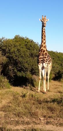 Shamwari Game Reserve Lodges: One of many seen