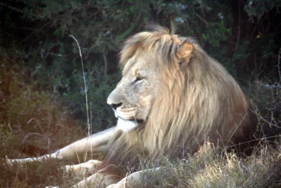 Shamwari Game Reserve Lodges: Not a telephoto picture