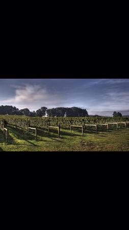 Nottingham, Pensylwania: Vineyard Vines
