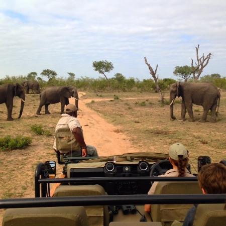 Singita Boulders Lodge: 3 of the big fice elephants