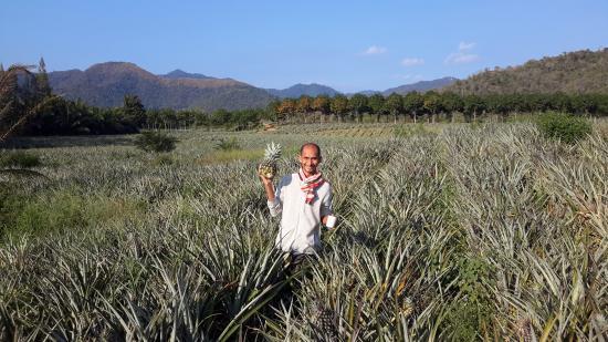 Prachuap Khiri Khan Province, Thailand: Bill in his pineapple fields