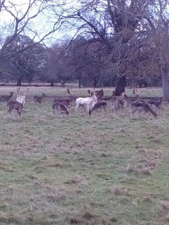 Charlecote Park: Charlecote Park and grounds