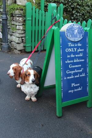 The Grasmere Gingerbread Shop (Sarah Nelson's): Basset Hound Approval
