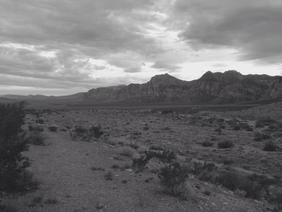 Pampas Las Vegas Photo