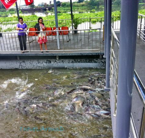 Pathum Thani, Tailandia: นักท่องเที่ยวและเด็กๆนิยมให้อาหารปลา