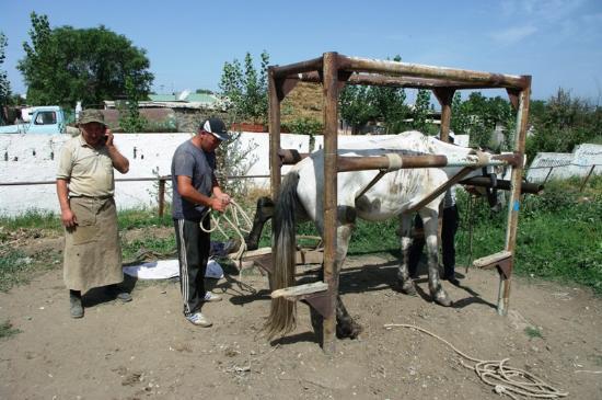 Issyk Kul Province