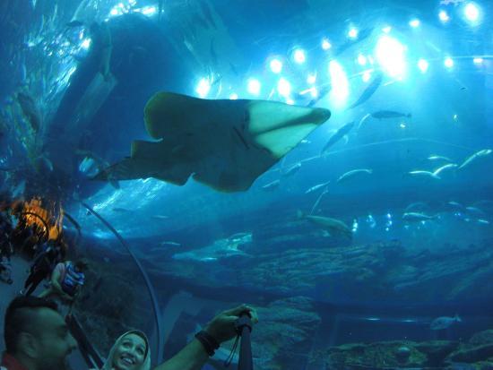 Dubai Aquarium & Underwater Zoo: photo0.jpg
