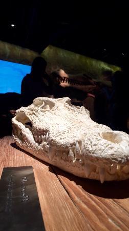 Dubai Aquarium & Underwater Zoo: photo2.jpg