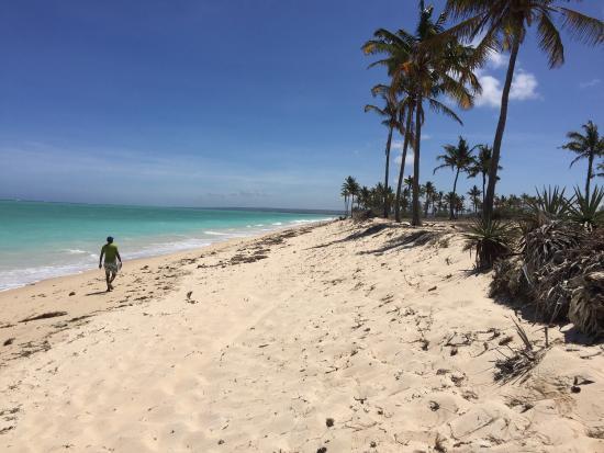 Chuiba Palms