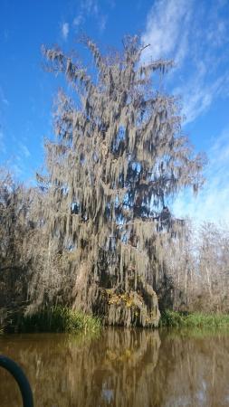 Honey Island Swamp Tours