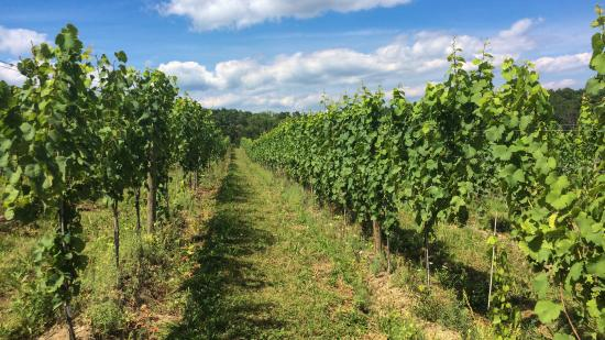 Bedford, Pensilvania: The Vineyard