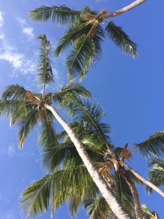 Dreams Palm Beach Punta Cana: Aussicht von der Liege