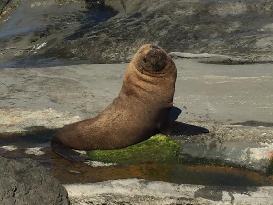 Вайрарапа, Новая Зеландия: Fur Seal