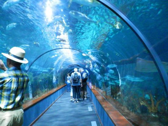 Dolphin show photo de loro parque puerto de la cruz Entradas aquarium valencia