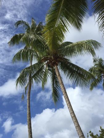 Mount Irvine, Tobago: photo1.jpg