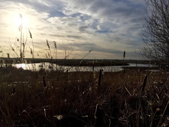 Purfleet, UK: Rainham Marshes