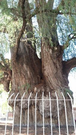 El Tule Tree of Life, Teotitlan Village, and Mitla Ruins Tour: 20151229_110901_large.jpg