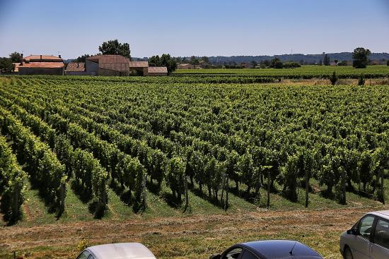 Saint-Hippolyte, France: Some of the vineyards: