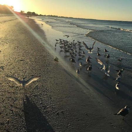 Sunrise with the birds on Bean Point