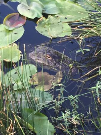 Wakodahatchee Wetlands: photo1.jpg