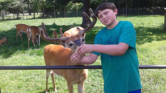 Minocqua, WI: Feed the deer