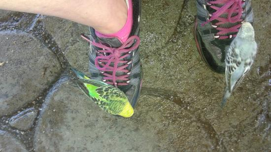Minocqua, Ουισκόνσιν: Birds on my shoe