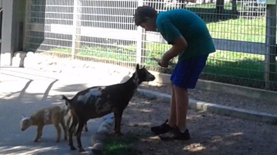 Minocqua, Ουισκόνσιν: Those goats again