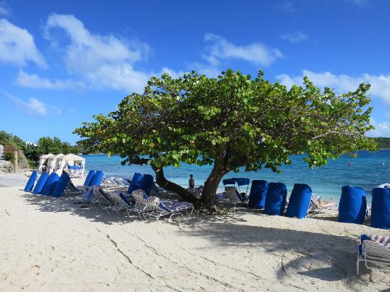 Gorgeous tree on the beach