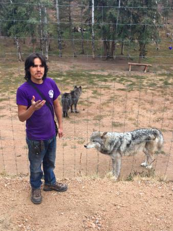 Divide, CO: Colorado Wolf and Wildlife Center