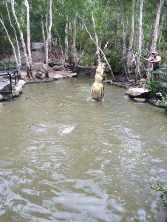 Getaway On Grafton: Hartley Croc Farm