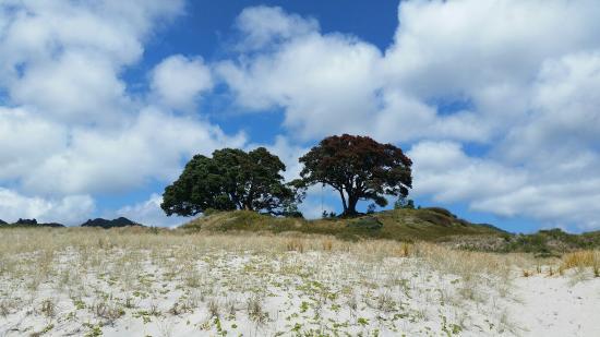 Great Barrier Island, Νέα Ζηλανδία: Near by trees on MEdlands Beach
