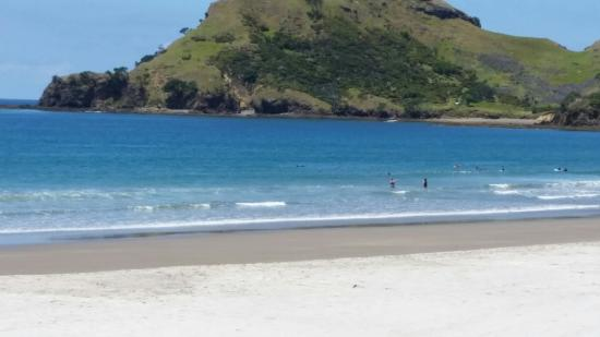 Great Barrier Island, Νέα Ζηλανδία: Dolphins in the surf.