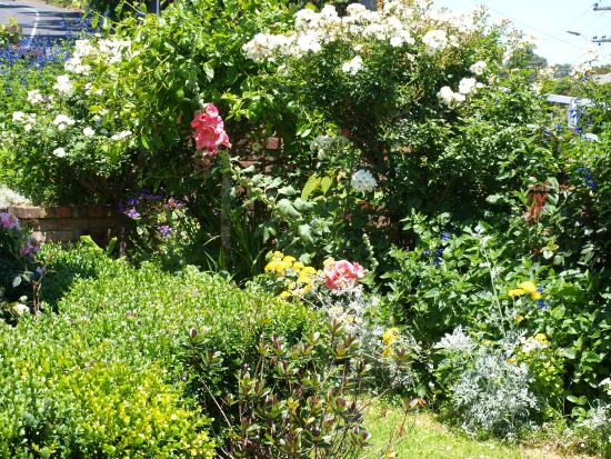 Hosking House: cottage garden out the front