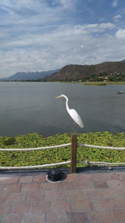 Romantic Lake Chapala: Цапля, здесь их много.