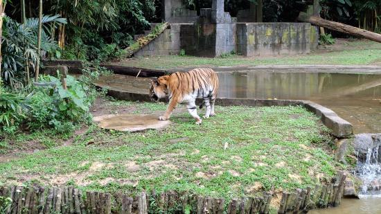 The Banjaran Hotsprings Retreat: Lost World of Tambun Zoo