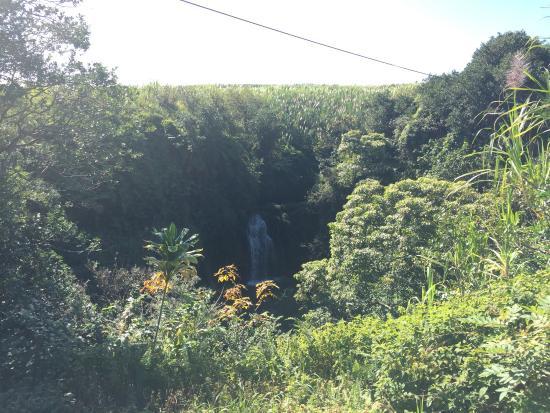 Honomu, هاواي: photo8.jpg