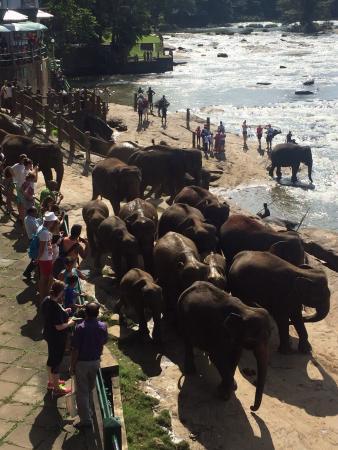 Hotel Elephant Park: photo2.jpg