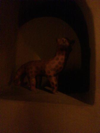 Guayaba Inn : Gato