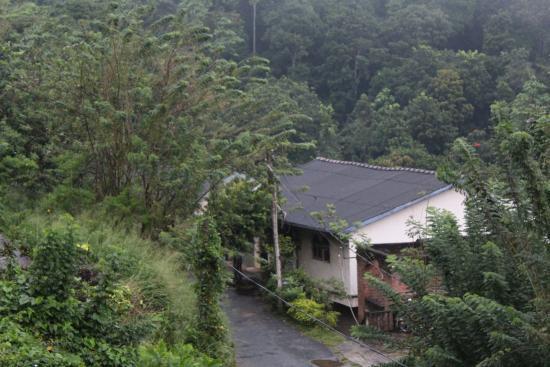 Nature Walk Resort: View from Balcony