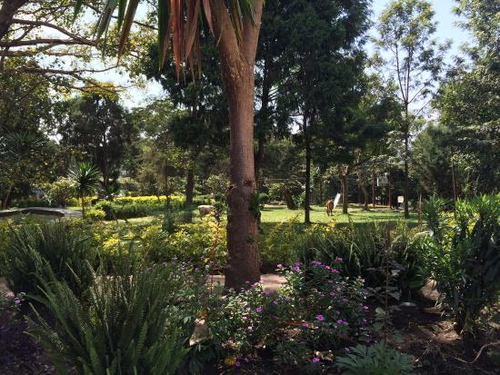 Wondo Genet, Ethiopia: photo2.jpg